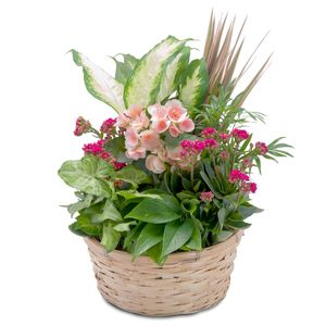 Sympathy and Funeral Flowers New Lebanon, NY, Lenox, MA