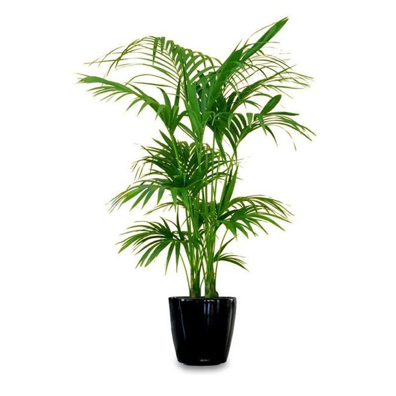 Pretty Palm Weston, Pembroke Pines, Plantation FL Florist - Art of on