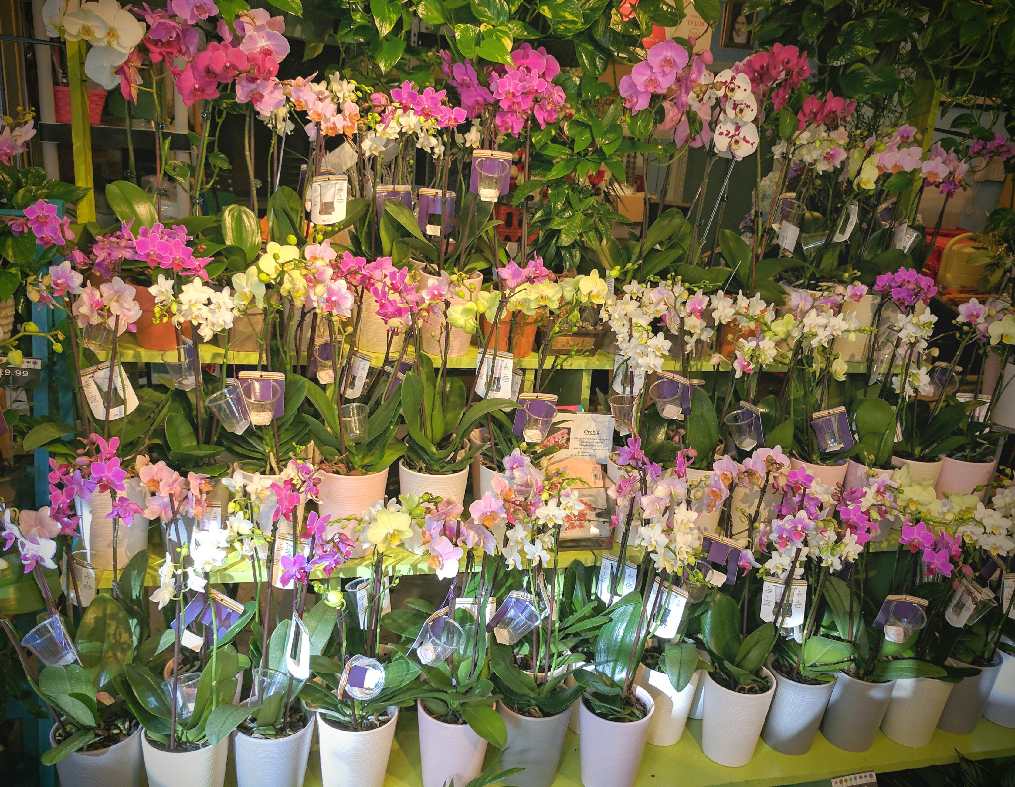 Orchid Care A Whole Bunch Flower Market Burlington Ma Florist