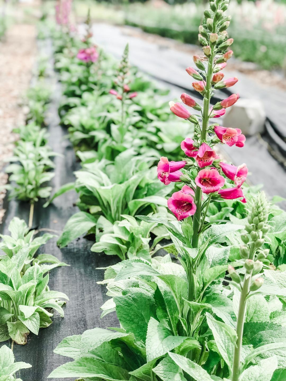 The Farm Alpharetta Wedding Flowers: Bantam and Bloom