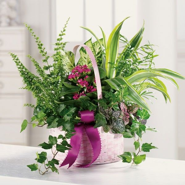 Amesbury Florist Newburyport Florist Flowers In