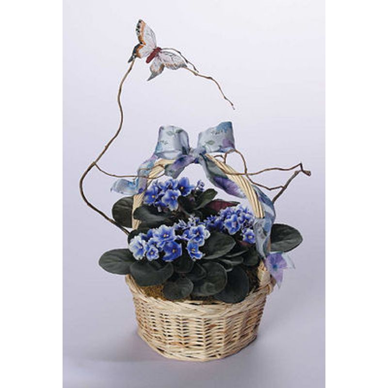Violets in wicker beverlys of midway beverlys flowers and gifts more views negle Choice Image