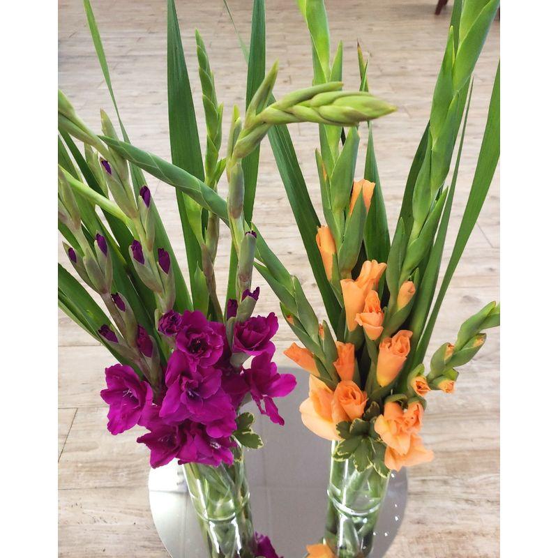 Vase Of Gladiolus Monroe Oh Florist Blissful Blooms Floral