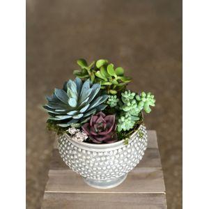 Flower shop, succulents - Bunches - Rockwall, Texas