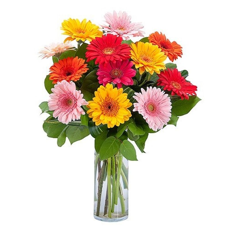 Bright Charming Gerberas Charlotte S Web Florists Calgary Flower