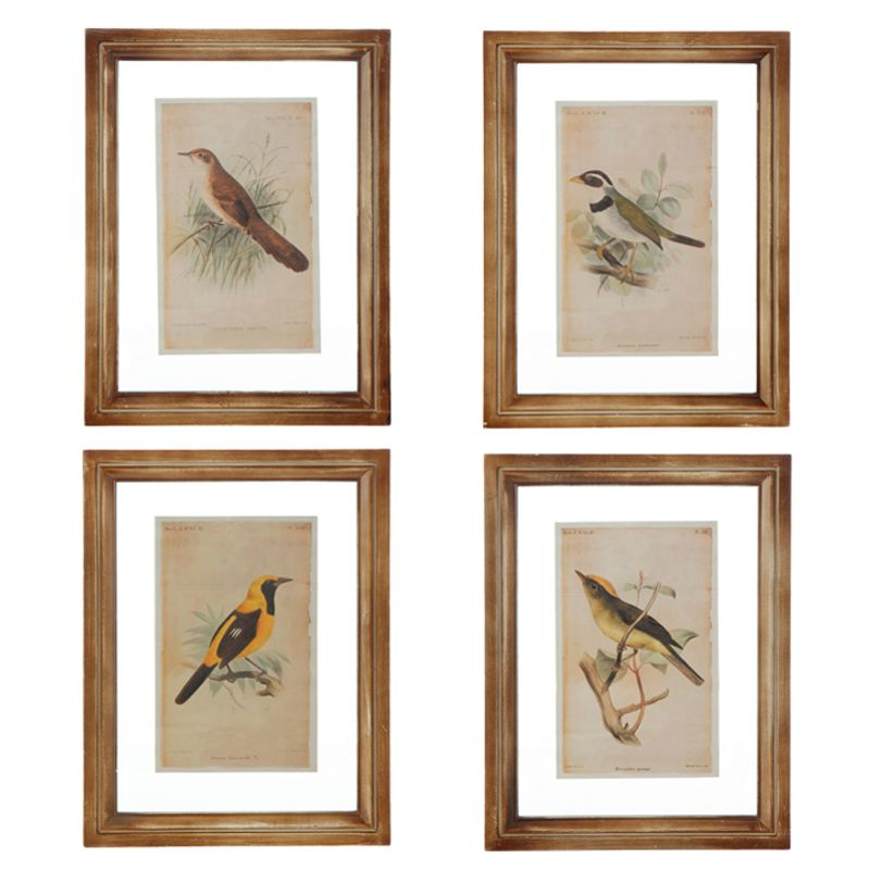 Framed Bird Prints Crown Florals | Parkersburg, WV 26101