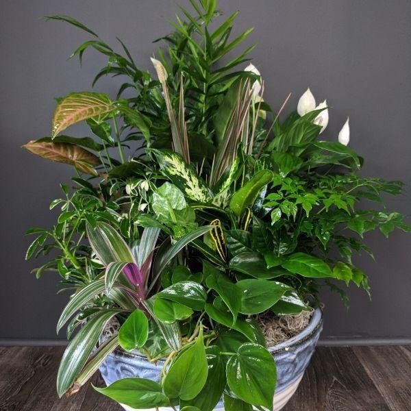 Large Planter Acorn Evergreen Flower