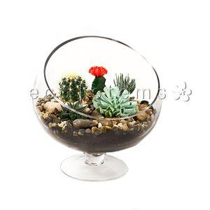 Bias Desert Terrarium in Toronto Ontario, eco|stems