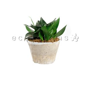 GREEN INDOOR TROPICAL PLANTS eco|stems - Toronto's Local Eco ... on