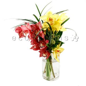 Cymbidium Orchid Arrangement in Toronto Ontario, eco|stems