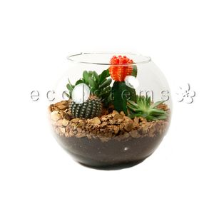 Desert Cacti And Succulent Terrariums Eco Stems Toronto S Local