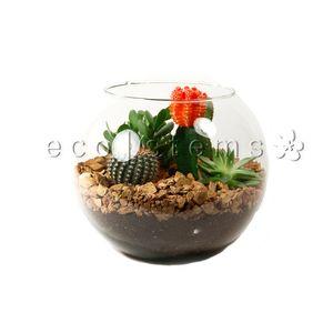 Fishbowl Desert Terrarium in Toronto Ontario, eco|stems