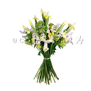 Iris En Masse Hand-tied Bouquet in Toronto Ontario, eco|stems