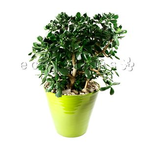Green Indoor Tropical Plants Ecostems Toronto Ontario Local Eco