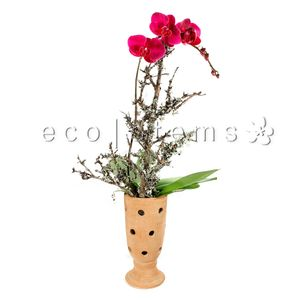POTTED ORCHIDS eco|stems - Toronto's Local Eco-Friendly Florist