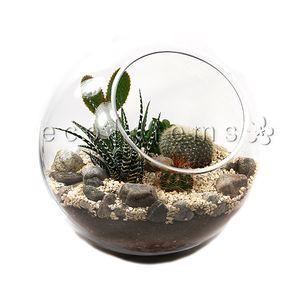 Desert Cacti And Succulent Terrariums Eco Stems Toronto S Local