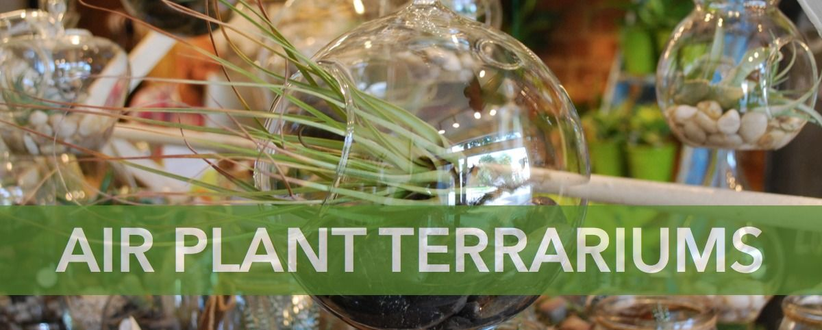 Air Plant Terrariums Tillandsia Eco Stems Toronto S Local Eco