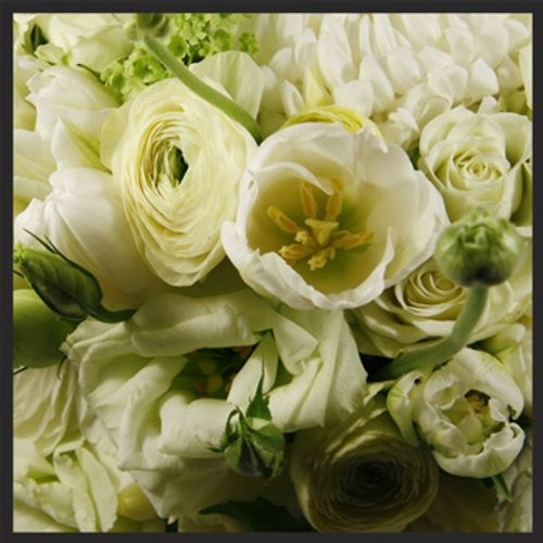 eco|stems - Toronto's Local Eco-Friendly Florist Delivering Daily