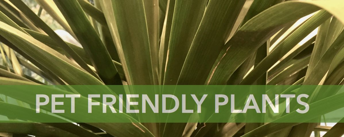 Pet Friendly Houseplants Eco Stems Toronto S Local Eco Friendly