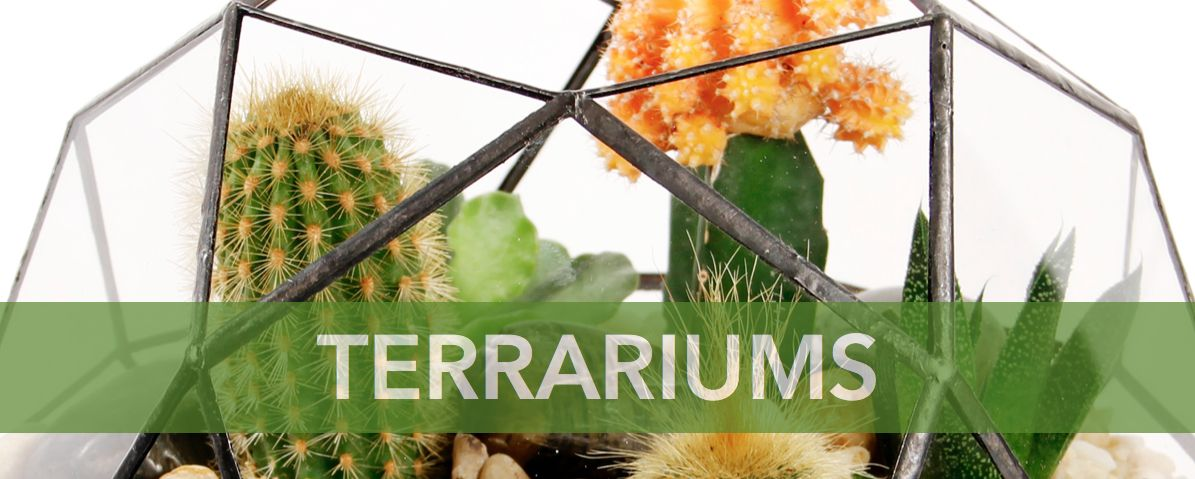 Terrariums Eco Stems Toronto S Local Eco Friendly Florist