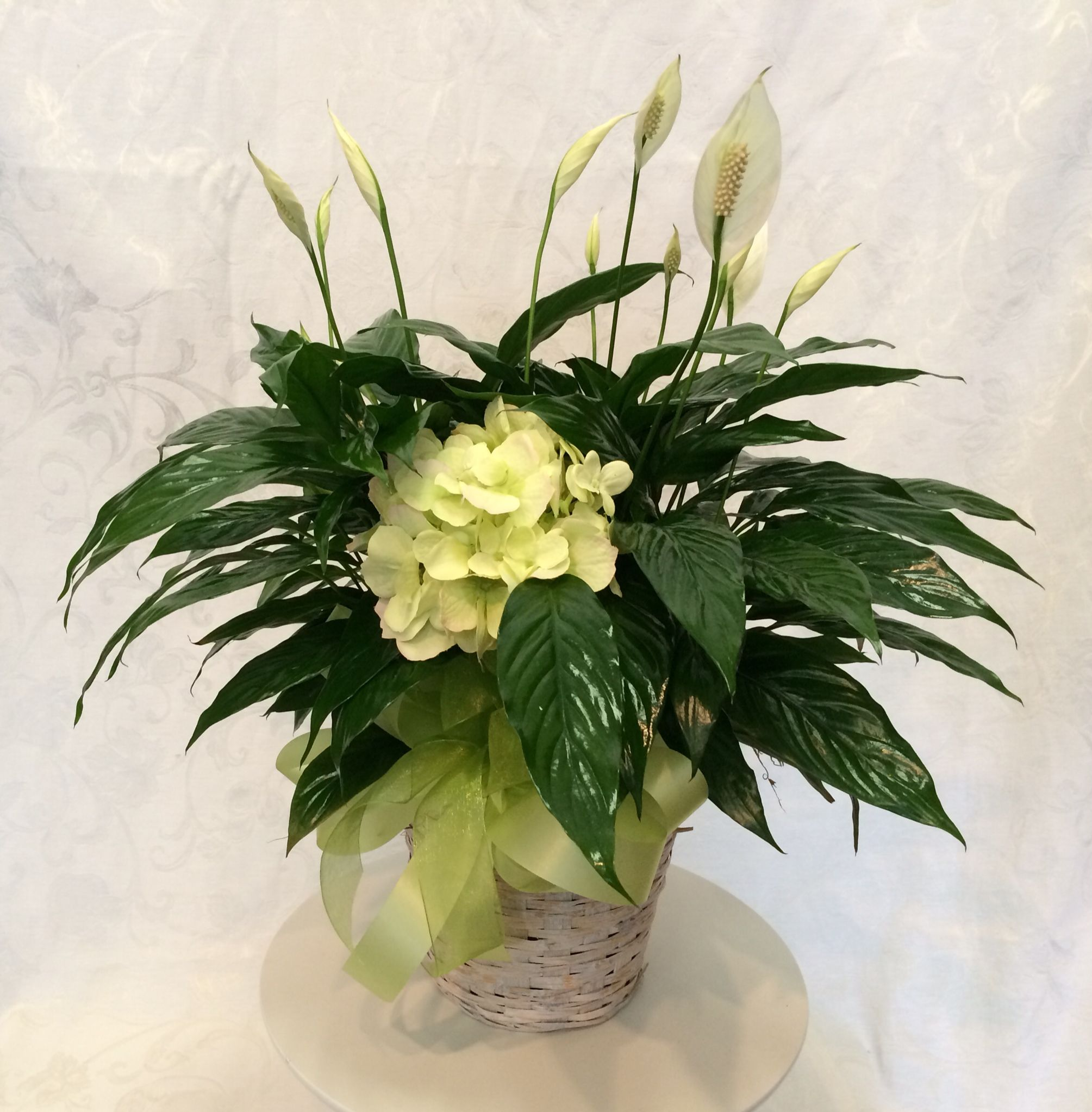 Peace Lily With Hydrangea House Of Flowers