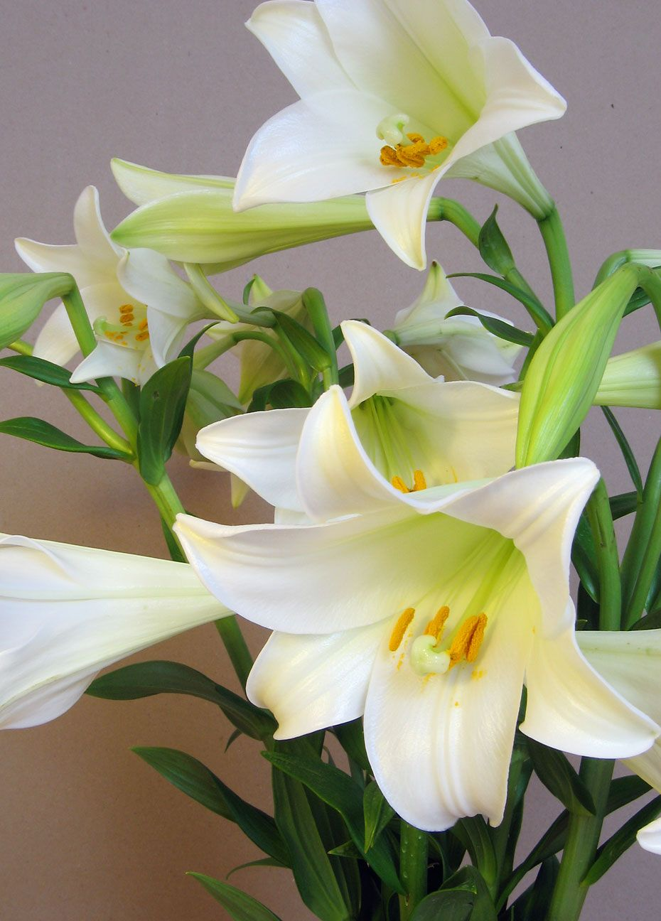 Blooming blog easter flower arrangements centerpieces are more that said lilies arent for everyone some people are allergic others just crave more texture in their easter flower arrangements and easter centerpieces izmirmasajfo
