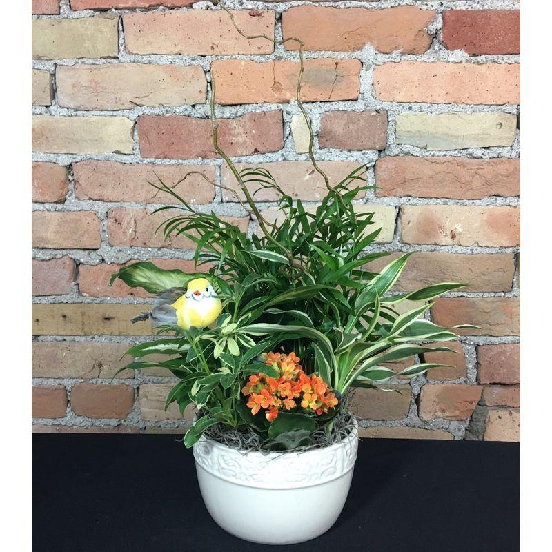 Kalanchoe Dish Garden Fleur De Lis Florist Skaneateles Ny Flower Shop