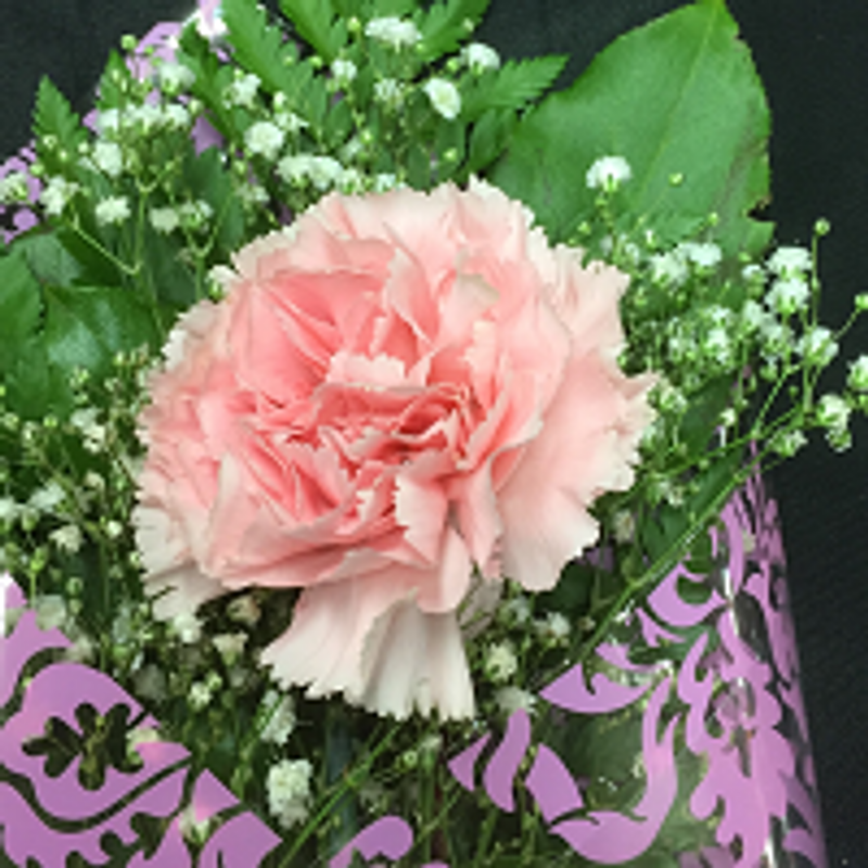 Single pink carnation wrap dayton tx florist flowers and more more views mightylinksfo