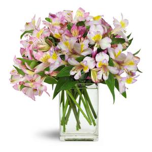 New baby flowers and gifts charlotte florist flower hut lovely lilies in charlotte nc flower hut charlotte negle Gallery