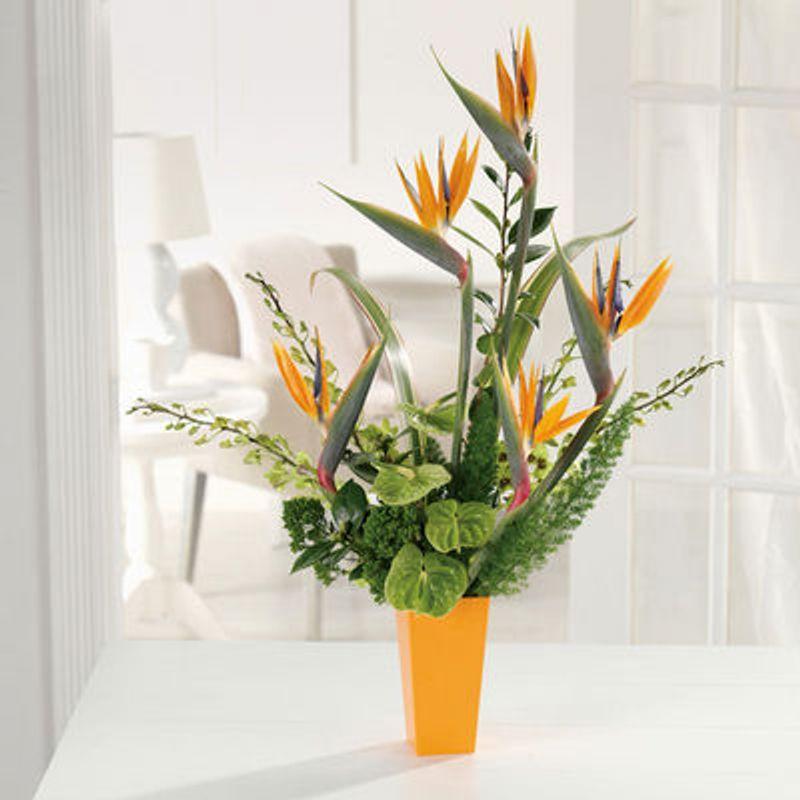 Paradise Pleasures Warren, MI 48092 Florist   Flowers and