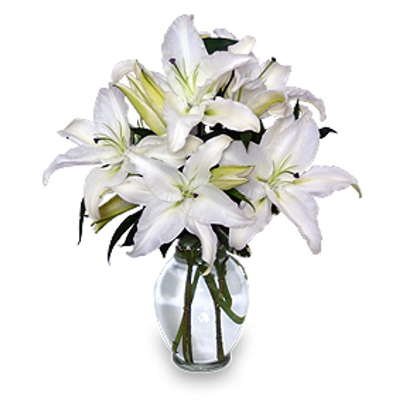 Casa Blanca Flower Flowers Ideas For Review