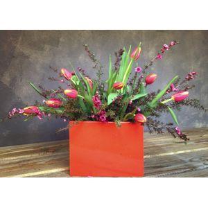 TuLip Kiss Custom Grown By Cache Valley Farmers in Logan UT, The Flower Shoppe -