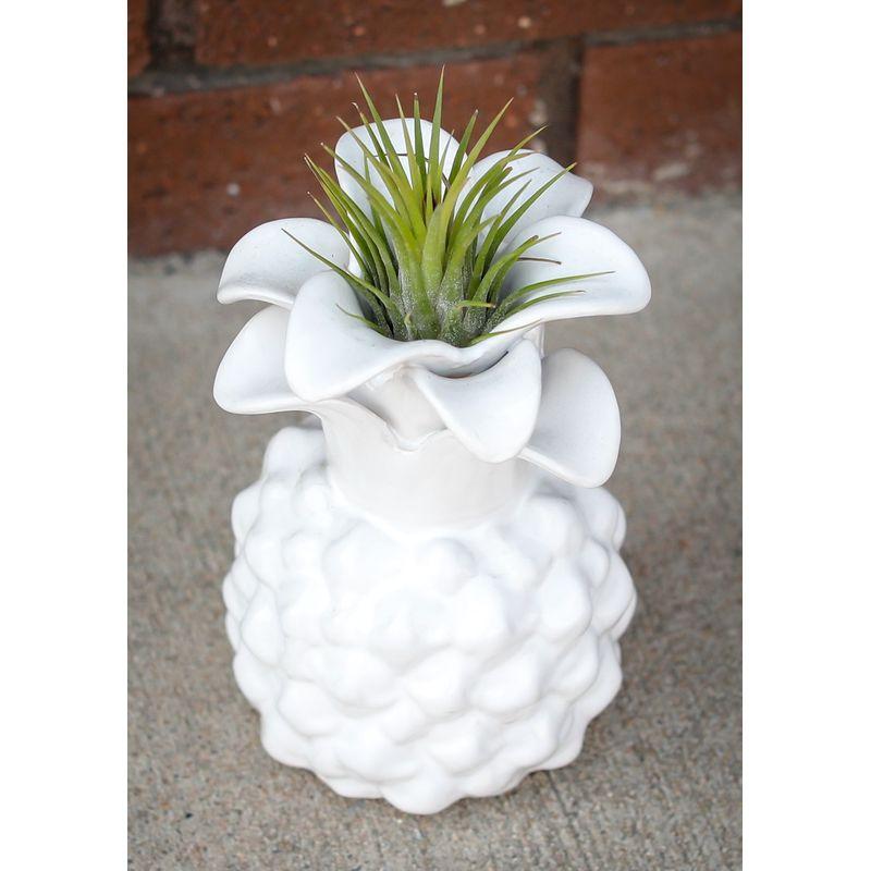 Living Air Plant In A Pineapple Vase Muskogee Ok Florist Flowers