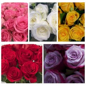 Home the flower shoppe jacksonville nc florist roses in jacksonville north carolina the flower shoppe mightylinksfo