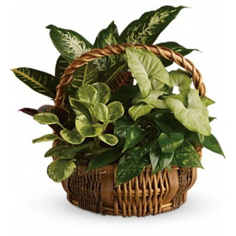 Emerald Garden Basket Midlothian, TX Florist   Growing Ideas Florist