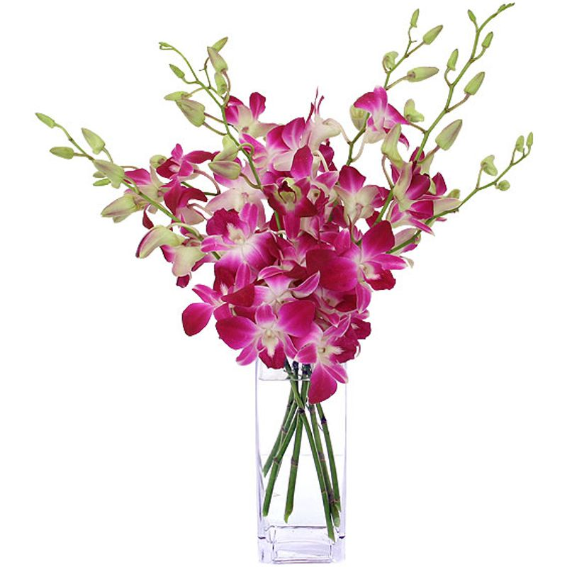 Dendrobium Orchid Vase Fort Lauderdale And Palm Beach Premier Orchid