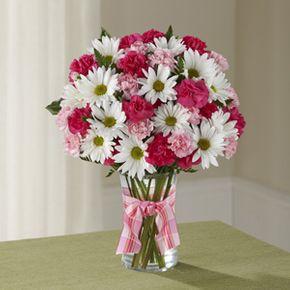 Sweet Daisies in Whitehorse Yukon Territory, In Bloom Flowers