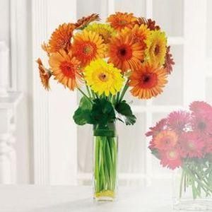 Kensington florist calgary calgary ab florist kensington florist mk gerbera garden in calgary ab kensington florist mightylinksfo