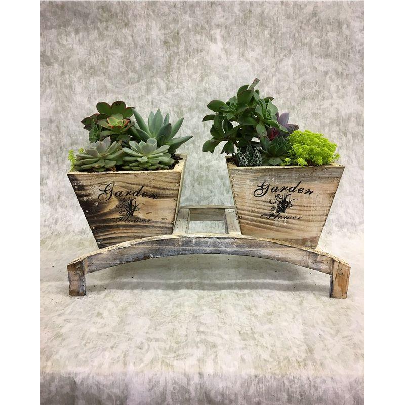 Fabulous Double Succulent Planter Akron Flowershop Kerns Florist Caraccident5 Cool Chair Designs And Ideas Caraccident5Info