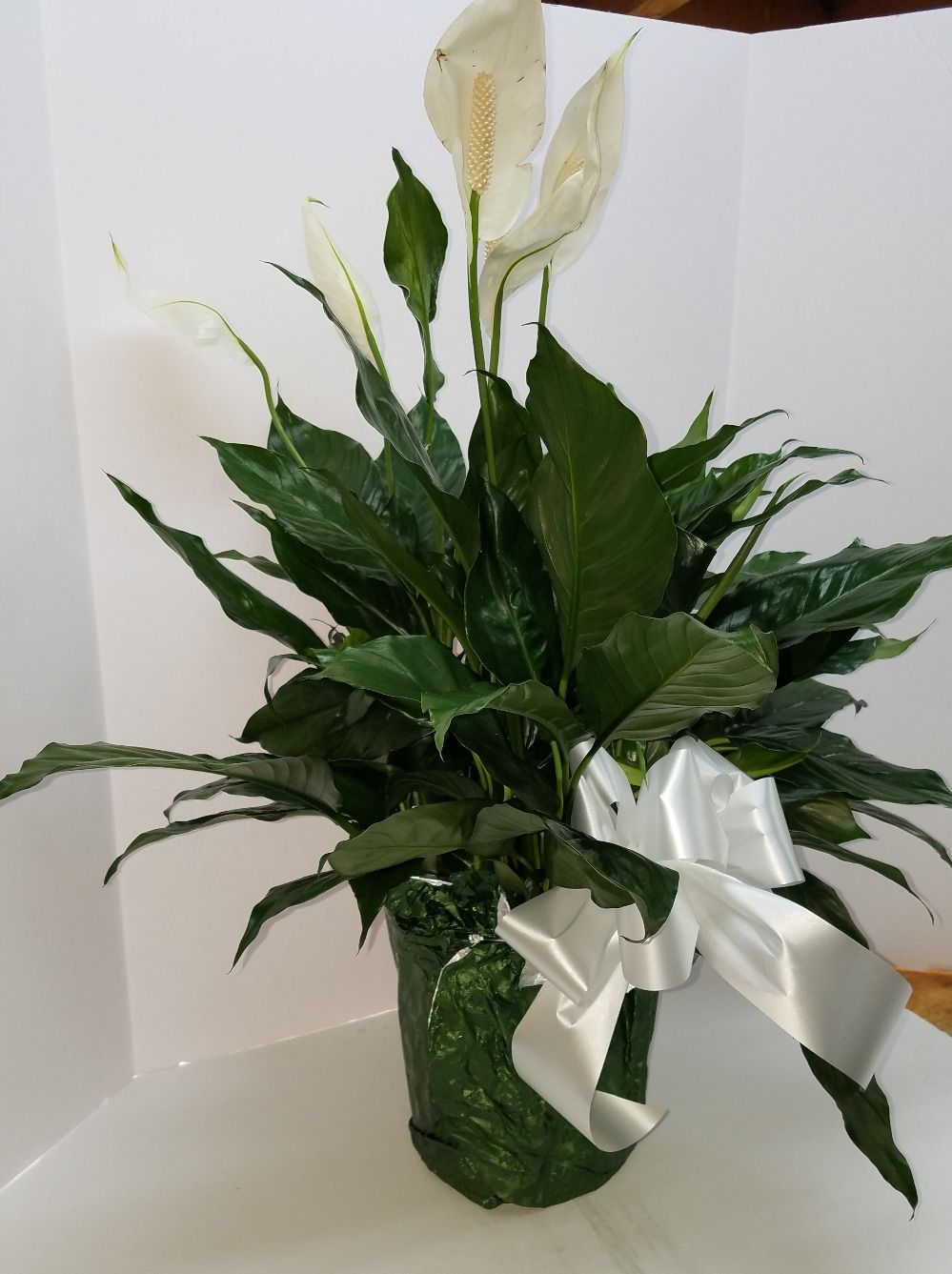 L 193 Small Peace Lily Leith Flower Plant Gift Shop Plaistow Nh