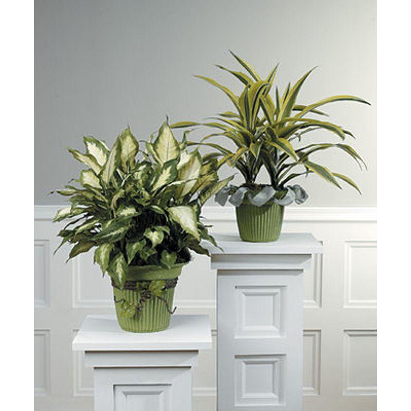 Green Plant In A Basket Lighthouse Flower Shop