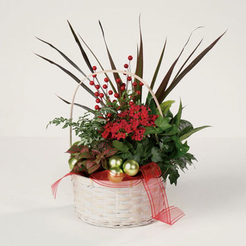 Merry Christmas Vine.Merry Christmas Dish Garden Torrington Florist Lily And Vine