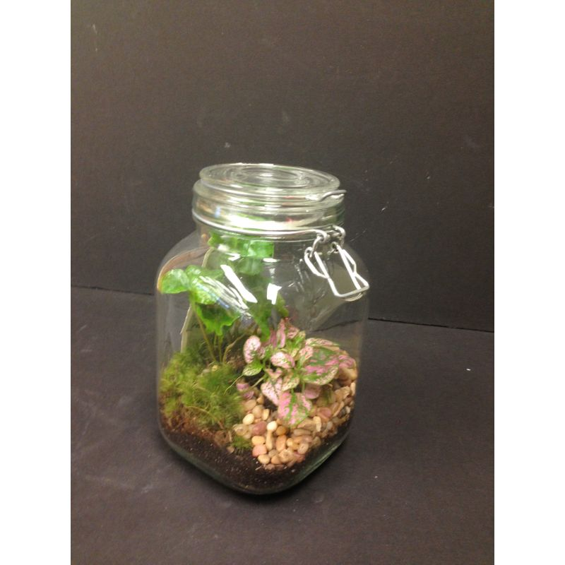 Ball Jar Terrarium Local Delivery Only Lopshire Flowers Fort