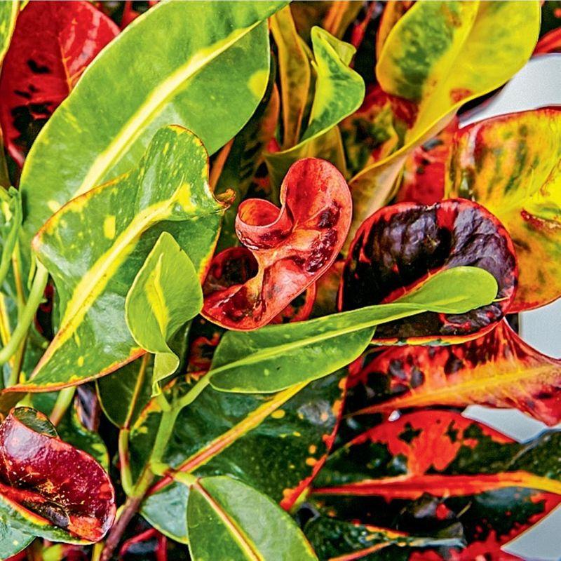 Tropical Plants Lush Flowers Houston Tx Local Flower Shop