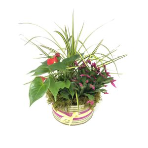 Exotic Beauty Basket In Greeley CO Mariposa Plants Flowers Gifts