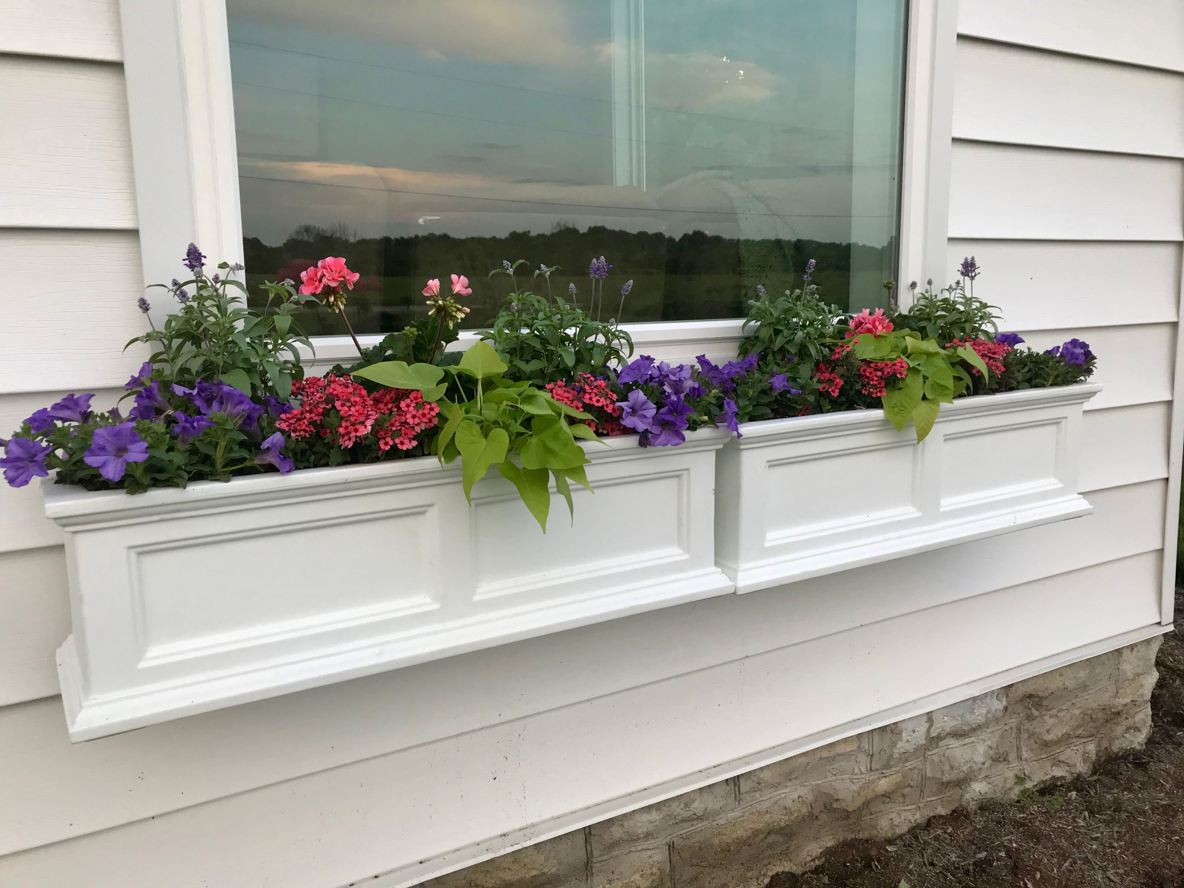 Blog window boxes lawrenceburg florist mccabes greenhouse floral this magic fertilizer is rich in iron and other micro nutients to keep the flowers blooming and keep the foliage a nice deep green color izmirmasajfo