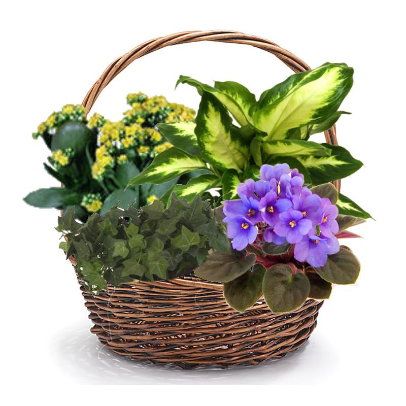 Kalanchoe garden basket colorado springs florist my floral shop more views mightylinksfo