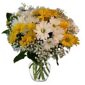 Colorado springs florist my floral shop colorado springs crazy daisies in colorado springs colorado my floral shop mightylinksfo