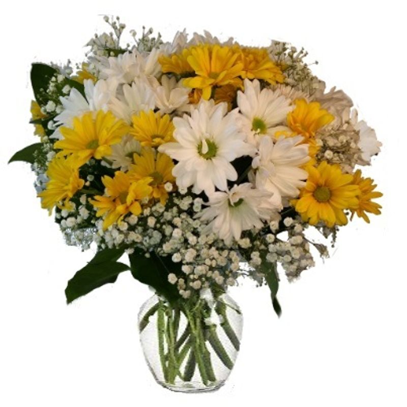 Crazy Daisies Colorado Springs Florist My Floral Shop Colorado