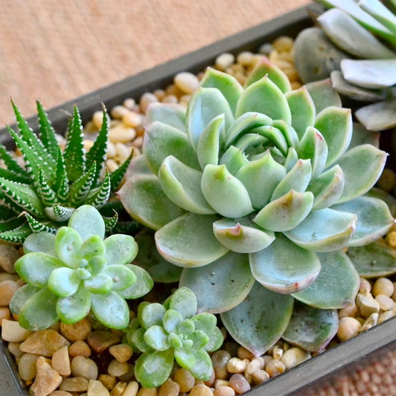 Succulent Gardens By Nature Nook Starting At Cleves Oh